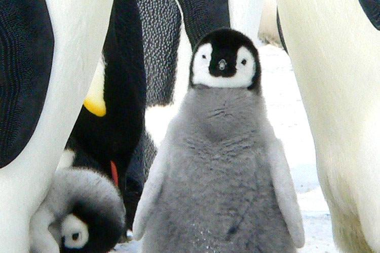 花蓮邦編輯-住在北極の企鵝寶寶